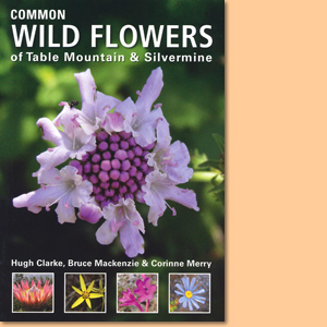 Common Wild Flowers of Table Mountain & Silvermine