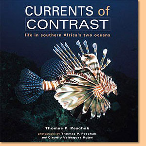 Currents of Contrast: Life in southern Africa's two oceans