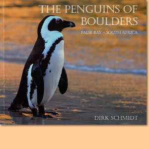 The Penguins of Boulders, False Bay-South Africa