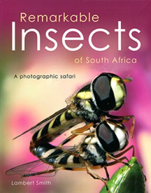 Remarkable insects of South Africa