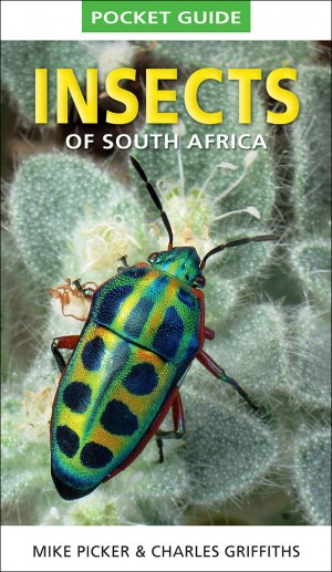 Insects of South Africa (Pocket Guide)