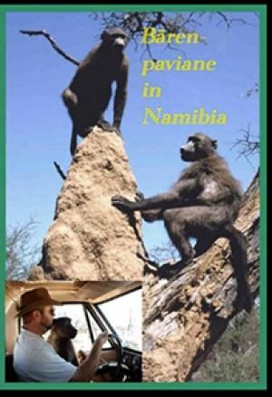 Bärenpaviane in Namibia