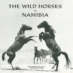 The wild horses of Namibia
