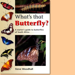 What's that Butterfly?