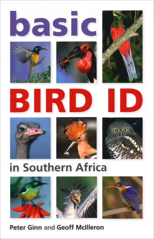 Basic Bird ID in southern Africa