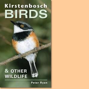 Kirstenbosch Birds and Other Wildlife