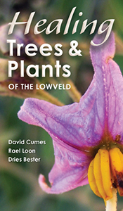 Healing trees and plants of the Lowveld