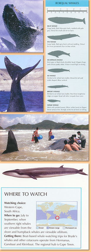 Whalewatcher. A global guide to watching whales, dolphins and porpoises in the wild