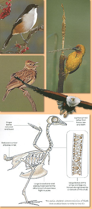 Birds. The Inside Story. Exploring birds and their behaviour in southern Africa