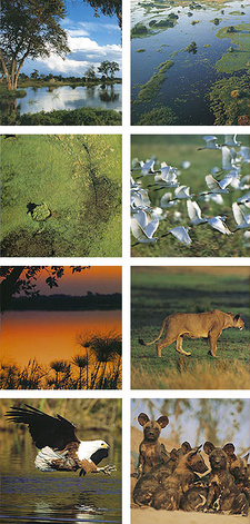 Okavango. A Journey, by Adrian Bailey and Robyn Keene-Young. ISBN 9781770072718 / ISBN 978-1-77-007271-8