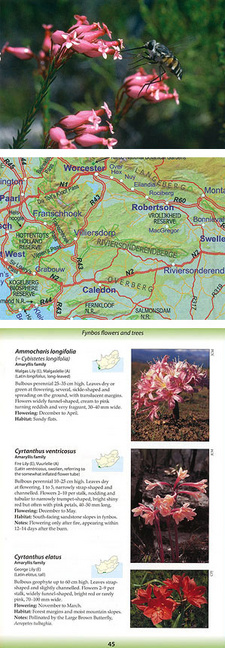 This is an excerpt from the Ecoguide Fynbos, by John Manning and Colin Paterson-Jones. ISBN 9781875093663 / ISBN 978-1-875093-66-3