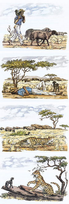 These illustrations are taken from Joachim Voigt's children's book The guinea-fowl and other fables from South West Africa (ISBN 0868480096 / ISBN 0-86848-009-6)