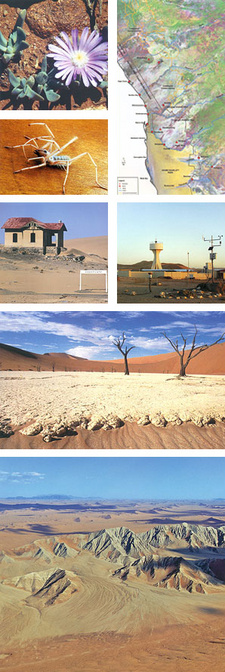 Images taken from Mary Seely's and John Pallet's book 'Namib: Secrets of a desert uncovered'. (ISBN 9780869767818 / ISBN 978-0-86976-781-8)