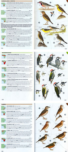 Chamberlain's Birds of Africa south of the Sahara Edition 2010, by Ian Sinclair and Peter Ryan.